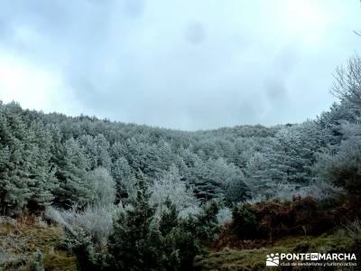 Acebos Montes Carpetanos; senderismo entre semana madrid